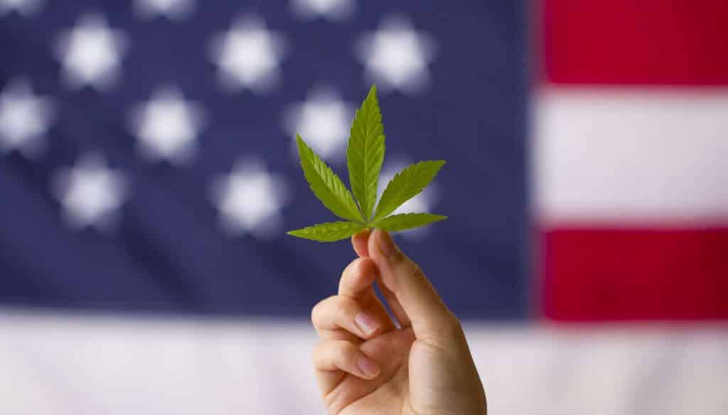 cannabis legalization in the united states of america. cannabis leaf in hands on usa flag background